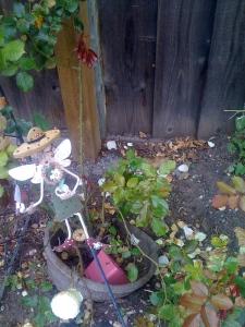 Garden Fairie